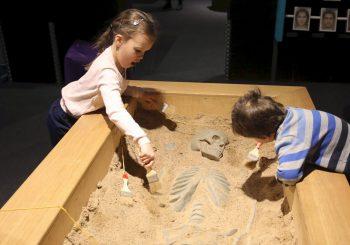 Открылась выставка «Живые системы» для детей