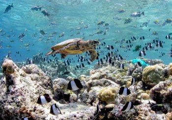 Риф Anantara Kihavah (Мальдивы) в прямом эфире