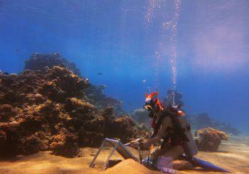 Единственный в мире подводный художник Ольга Белка этим летом будет писать на Мальдивах