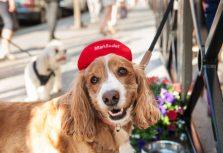 Бостон. Mandarin Oriental ждет гостей с собаками