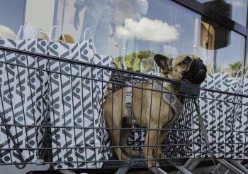 Stockmann открыл поилку для собак
