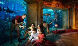 Семейный отдых в Дубае – учиться, совершать открытия, исследовать и развиваться