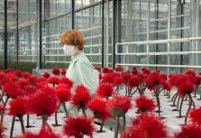 Фильм «Цветочек счастья» раскрывает опасность стремлений к вечному счастью