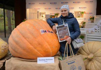 Maxima объявляет прием заявок на 15-й Латвийский чемпионат тыкв