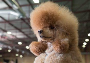 """На """"PetExpo 2019"""" будут кошки, собаки и даже танцы"""