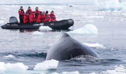 В Антарктиду за солнечным затмением на Silver Wind