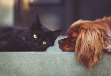 «Не забывай о домашнем животном и при чрезвычайной ситуации!», – напоминает PetExpo
