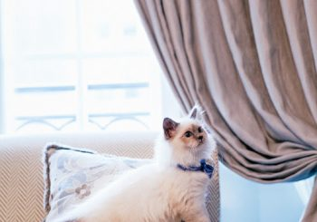 В Le Bristol Paris произошла смена кошачьей власти